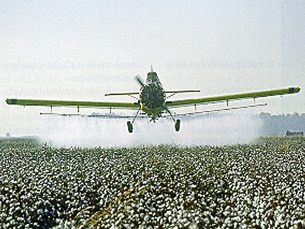 Photo Courtesy of Texas Department of Agriculture